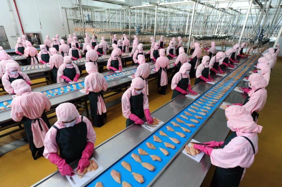 [Nhật Bản] Tuyển nữ chế biến cơm hộp lương cơ bản 15 Man thi tuyển tháng 4.2016