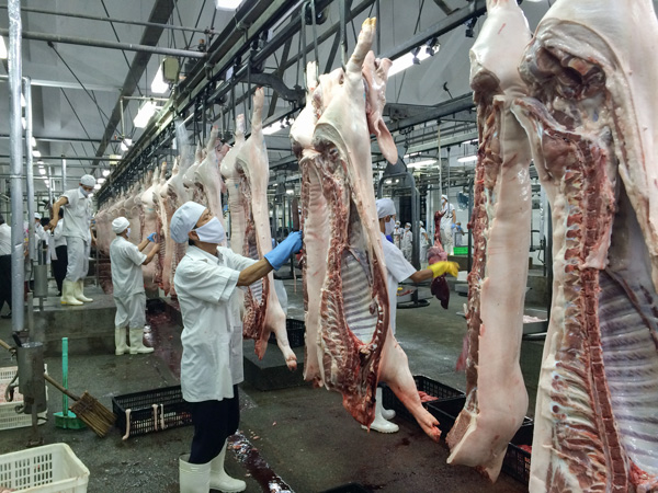 [Rumani] tuyển đơn hàng 80LD Chế biến thịt lợn ngày 31/5
